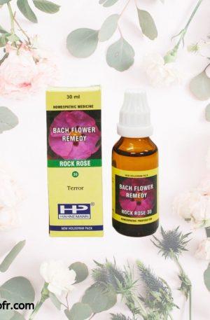 Natural Bach Flower Remedies-Rock Rose